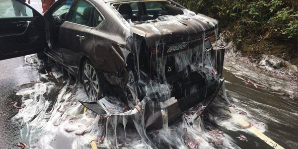 You've Been Slimed! Hagfish Truck Triggers Creepy Collision in Oregon